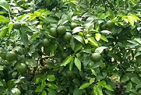 水果种植基地展示一