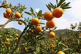 水果种植基地展示四
