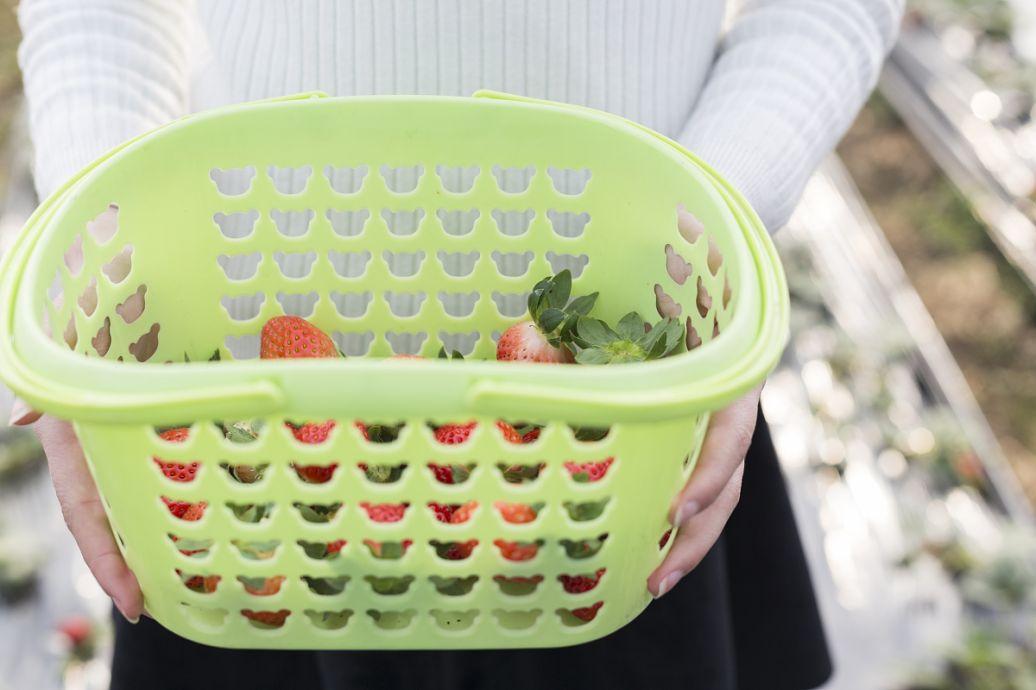有哪些塑料可以用来做水果筐